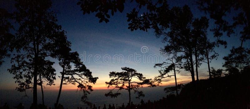 Het silhouet van de panoramamening van pijnboombomen met zonsondergang lichte en blauwe hemel stock foto's