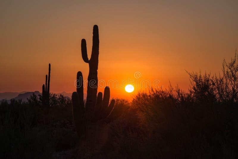 Het silhouet van de Saguarocactus in de woestijn van Arizona bij zonsondergang royalty-vrije stock afbeeldingen