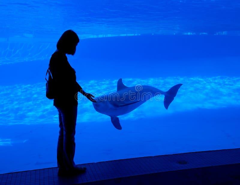 Het silhouet van de vrouw bij aquarium royalty-vrije stock foto's