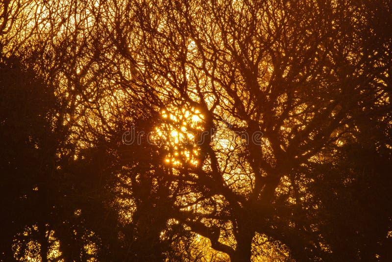Het silhouet van de de winterboom en het plaatsen zon in landbouwgrond dichtbij Bexhill in East Sussex, Engeland royalty-vrije stock afbeelding