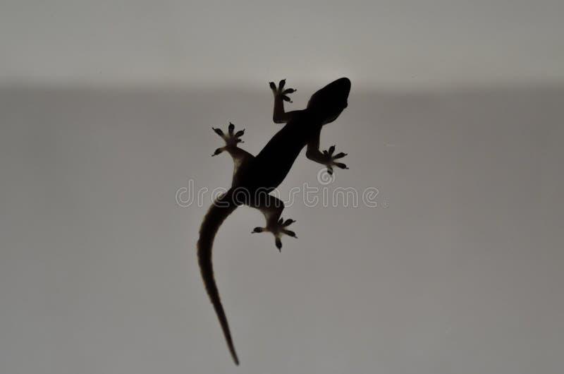 Het silhouet van een hagedis stock afbeelding