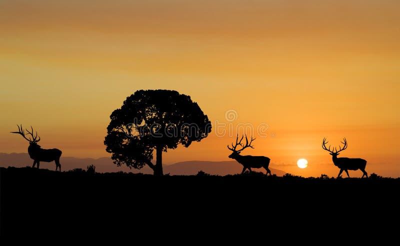 Het Silhouet van elanden royalty-vrije stock afbeelding