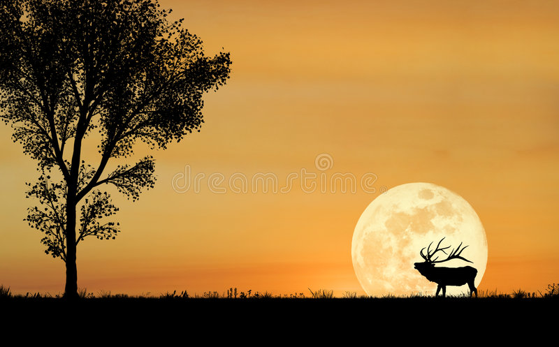 Het Silhouet van elanden royalty-vrije stock fotografie