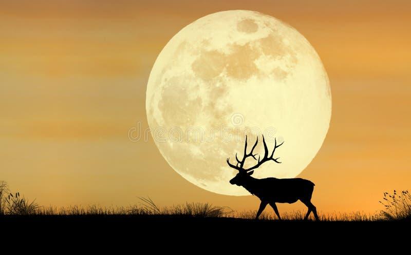 Het Silhouet van elanden royalty-vrije stock afbeeldingen