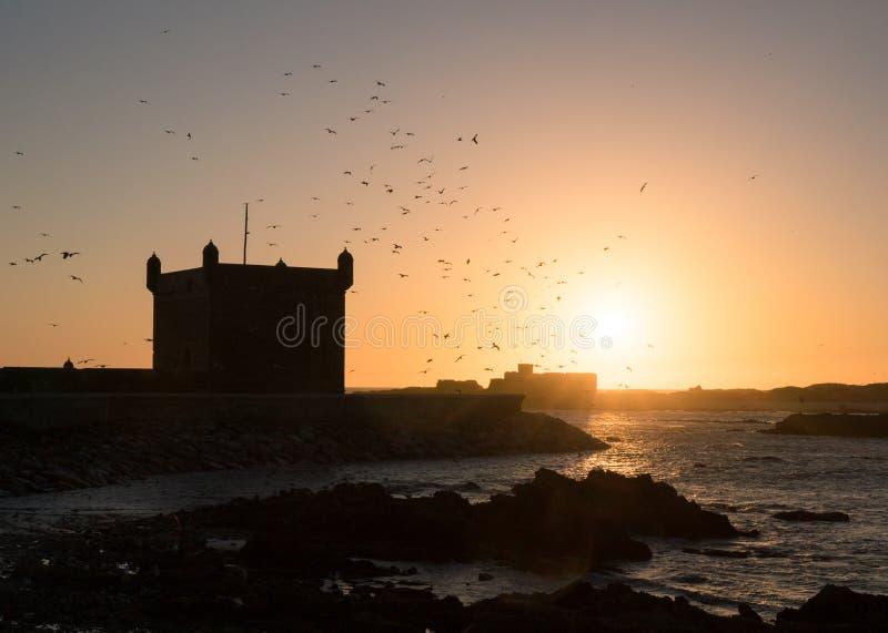 Het silhouet van het Essaouirafort op de achtergrond van de zonsonderganghemel met vliegende zeemeeuwen in Marokko stock fotografie