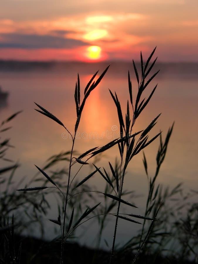 Het Silhouet van het gras stock afbeelding
