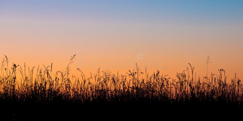 Het silhouet van het grasgebied royalty-vrije stock afbeeldingen
