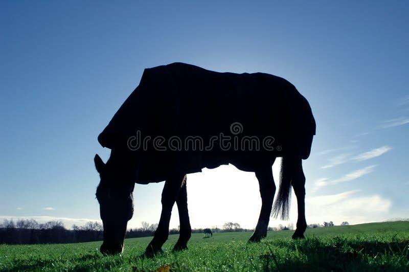 Het silhouet van het paard royalty-vrije stock foto