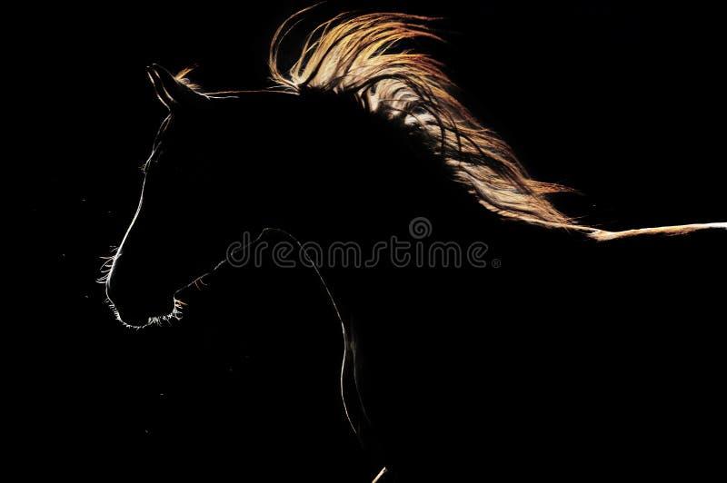 Het silhouet van het paard op de donkere achtergrond stock foto's