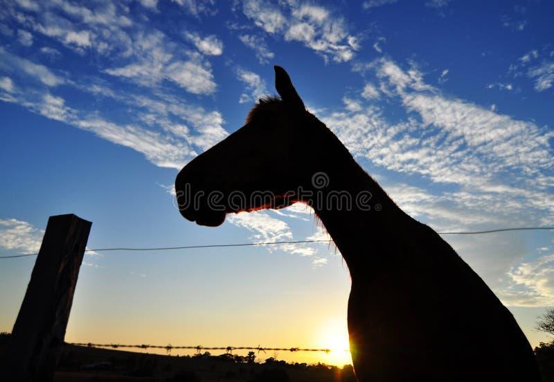 Het silhouet van het paard in zonsondergang op landlandbouwbedrijf stock fotografie