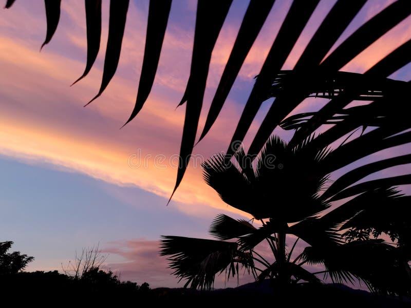 Het silhouet van het palmblad bij zonsondergang, palm dichte omhooggaand met mooie zonsondergangachtergrond stock fotografie
