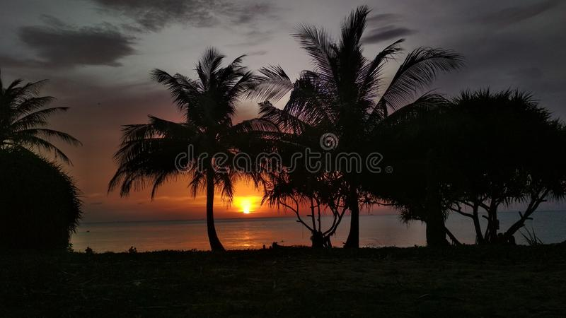 Het silhouet van palmen bij zonsondergang stock afbeelding