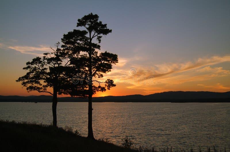 Het silhouet van pijnbomen royalty-vrije stock fotografie