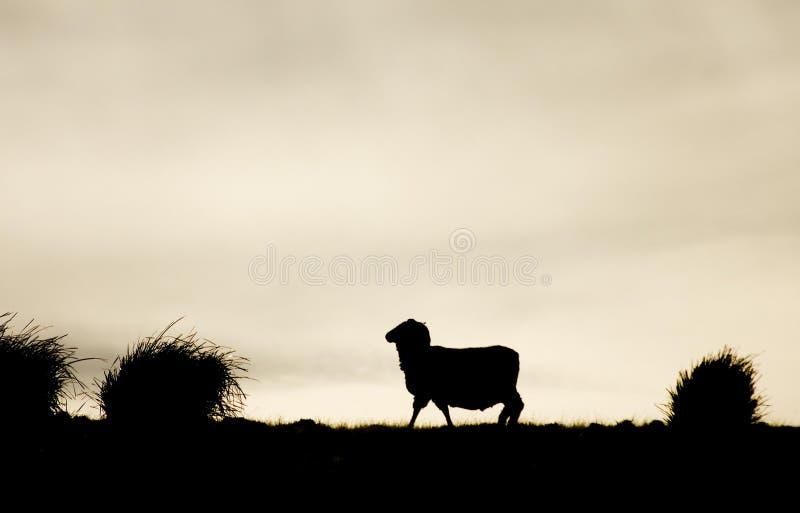 Het Silhouet van schapen royalty-vrije stock afbeelding