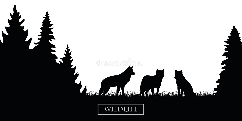 Het silhouet van het het wild wolfs pak in het bos op de zwart-witte weide royalty-vrije illustratie