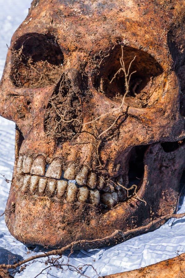 Het skelet blijft van een begraven onbekend slachtoffer royalty-vrije stock foto's
