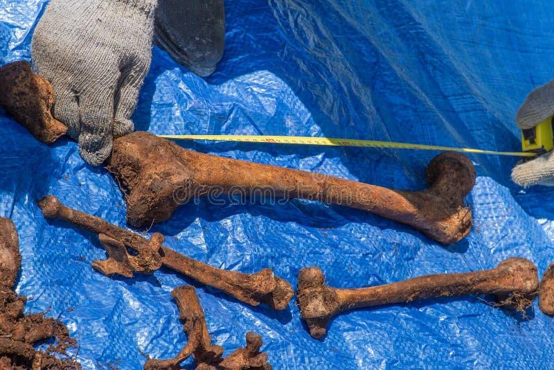 Het skelet blijft van een begraven onbekend slachtoffer royalty-vrije stock foto
