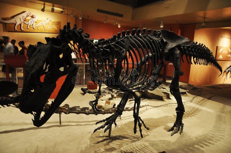 Het Skelet van de dinosaurus in het Museum van Washington stock afbeeldingen