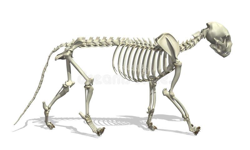 Het Skelet van de kat stock illustratie
