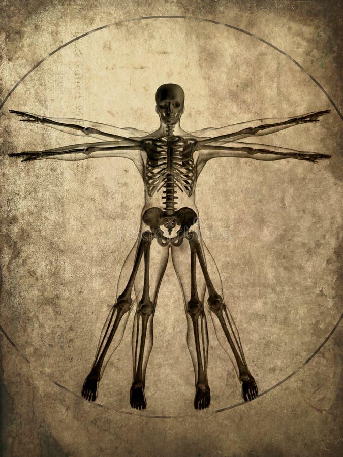 Het skelet van Grunge royalty-vrije illustratie