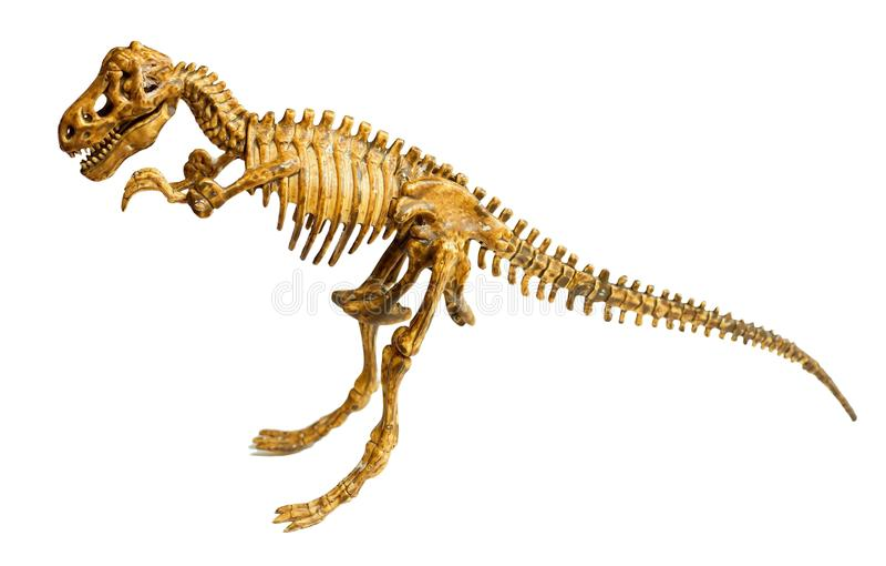 Het skelet van Trex dat op wit wordt geïsoleerdd royalty-vrije stock afbeeldingen