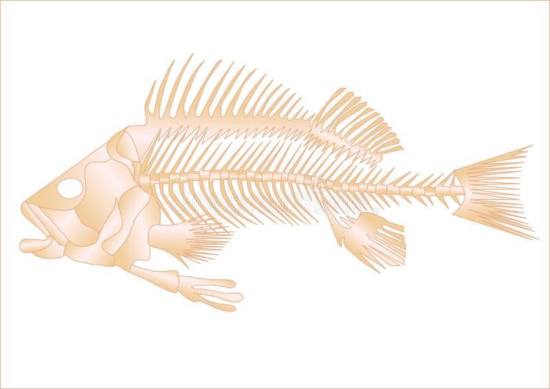 Het skelet van vissen vector illustratie