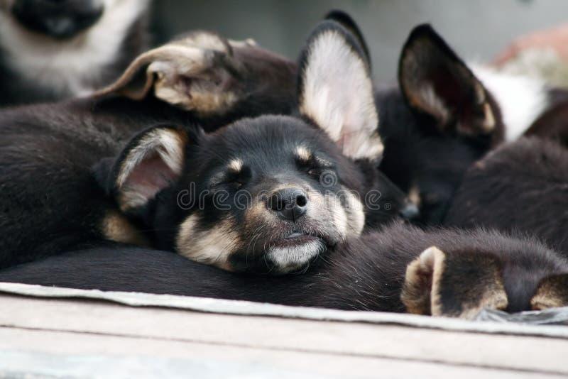 Het slaappuppy. stock foto