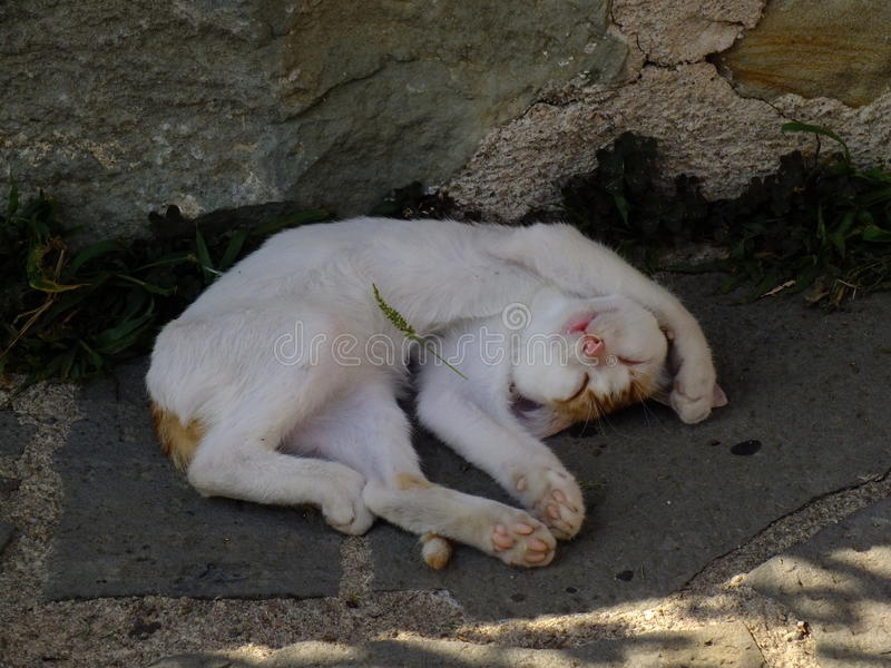 Het slapen christelijke kat royalty-vrije stock afbeeldingen