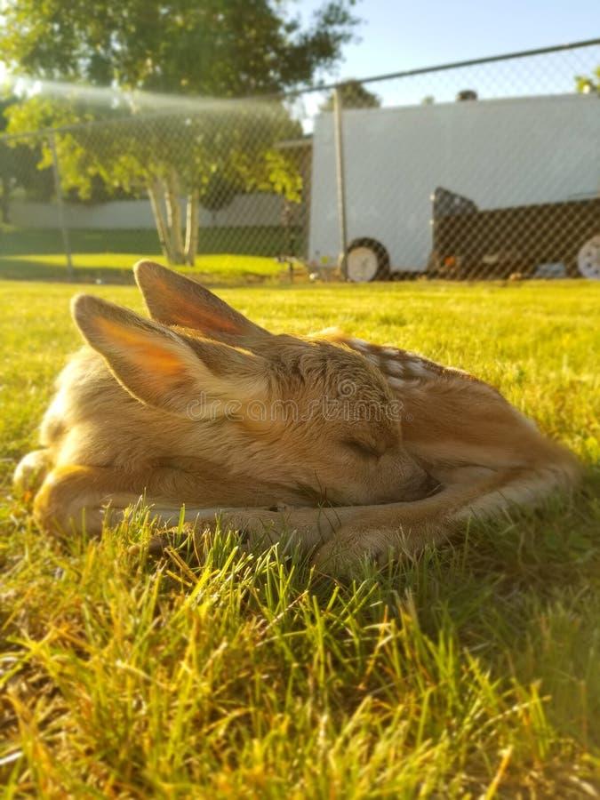 Het slapen in de zon royalty-vrije stock afbeeldingen