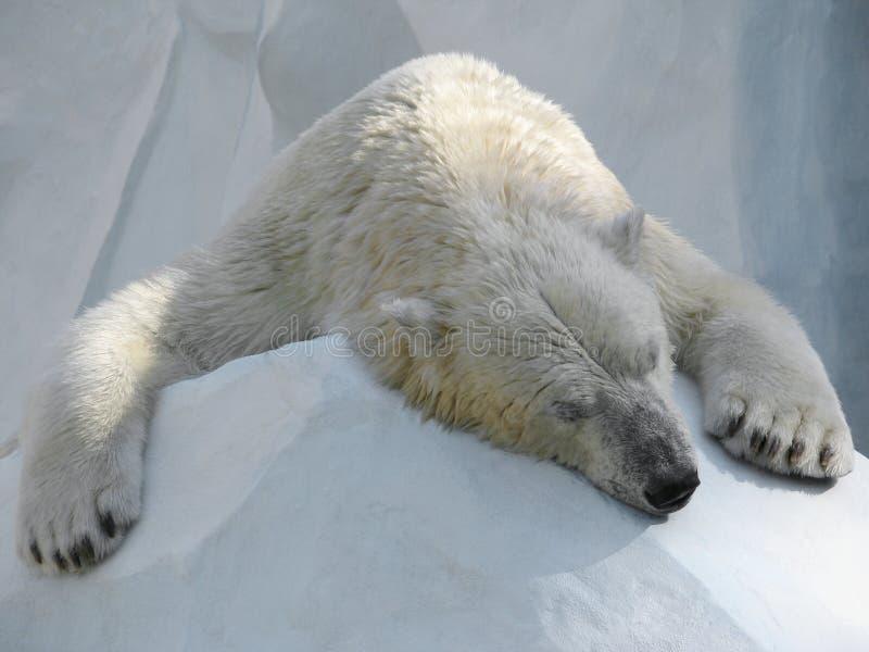 Het slapen ijsbeer stock foto