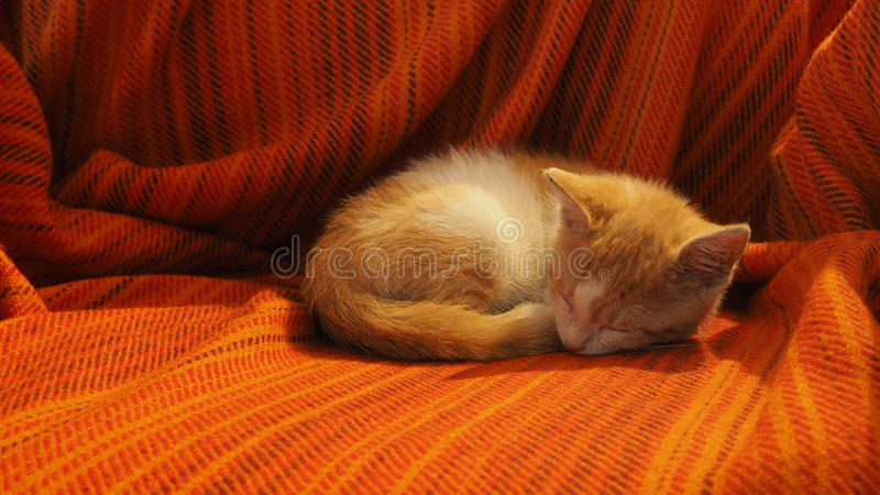 Het slapen rood katje royalty-vrije stock afbeelding