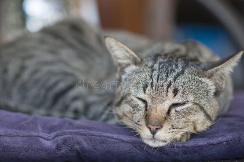 Het slapen Siamese kat op een stoel onder de zon royalty-vrije stock fotografie