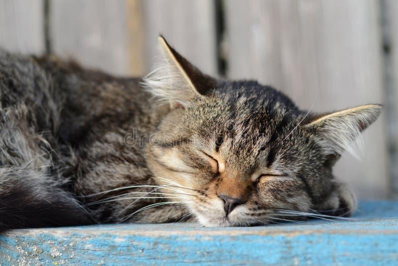 Het slapen tabby kat Vreedzame diepe slaap Landelijke grijze kattenslaap dichtbij de omheining stock afbeelding