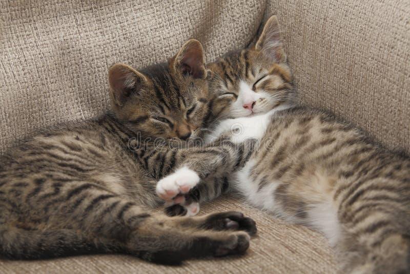 Het slapen van katjes royalty-vrije stock afbeeldingen