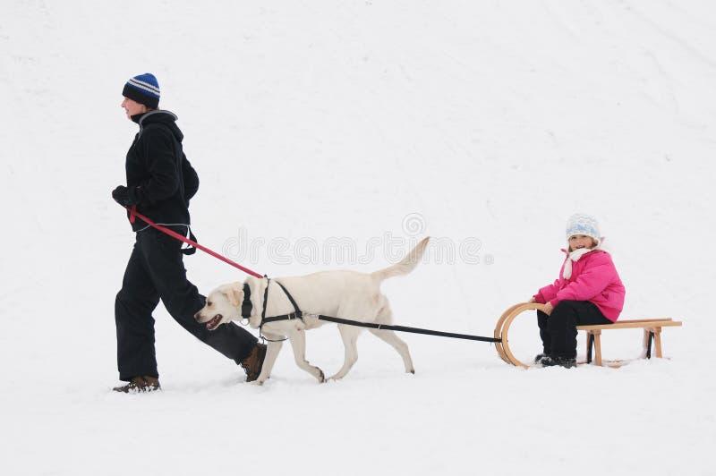 Het sledding van de winter met hond royalty-vrije stock afbeelding