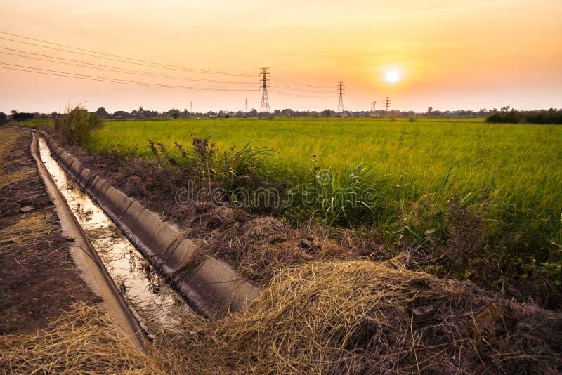 Het slootwater dichtbij padiepadievelden ziet de zonsondergang stock afbeeldingen