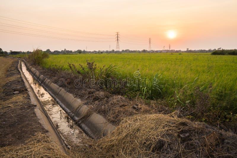 Het slootwater dichtbij padiepadievelden ziet de zonsondergang royalty-vrije stock fotografie