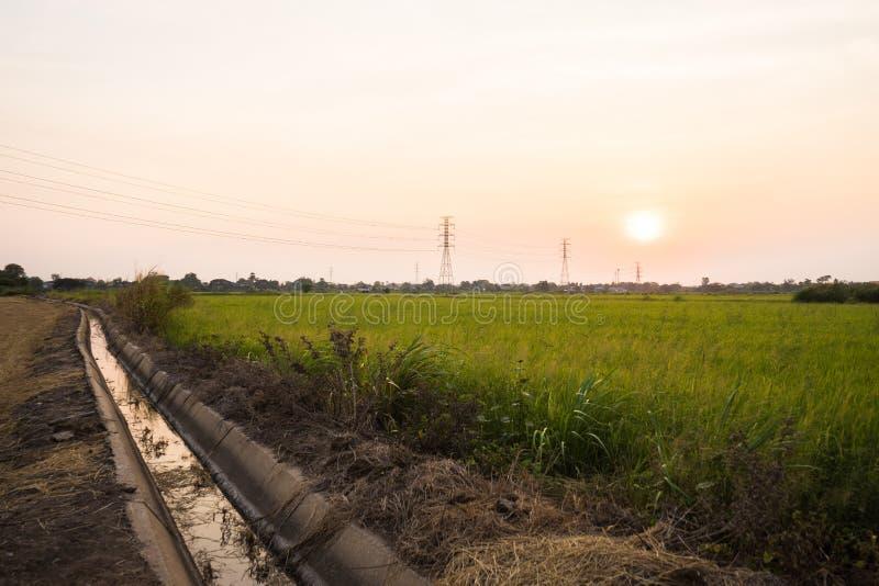 Het slootwater dichtbij padiepadievelden ziet de zonsondergang en hoogspanningspooltoren royalty-vrije stock afbeeldingen