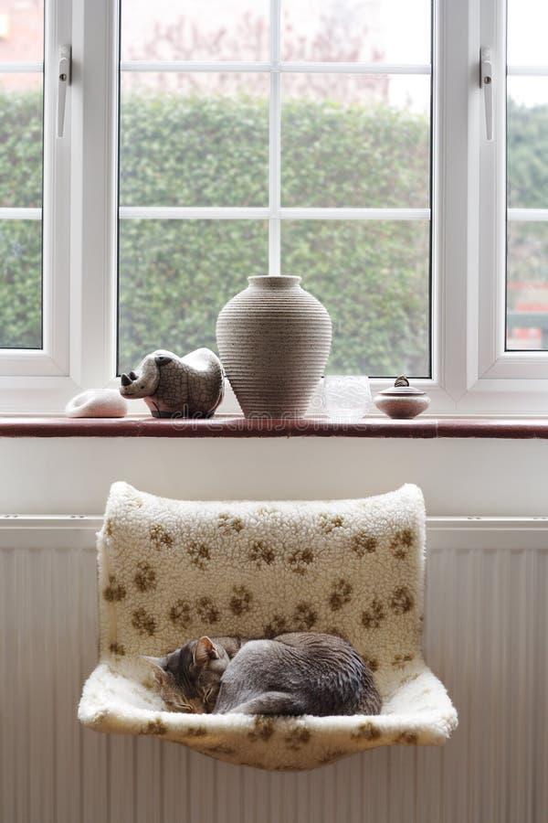 Het sluimeren van de kat op radiator stock afbeeldingen