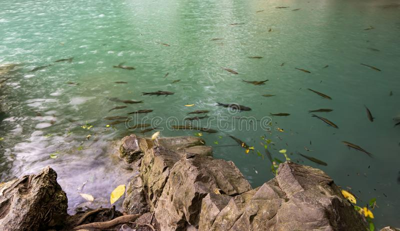 Het smaragdgroene water van de waterval, vissen leeft in de vijver, Erawan-waterval, Kanchanaburi-provincie, Thailand royalty-vrije stock afbeeldingen