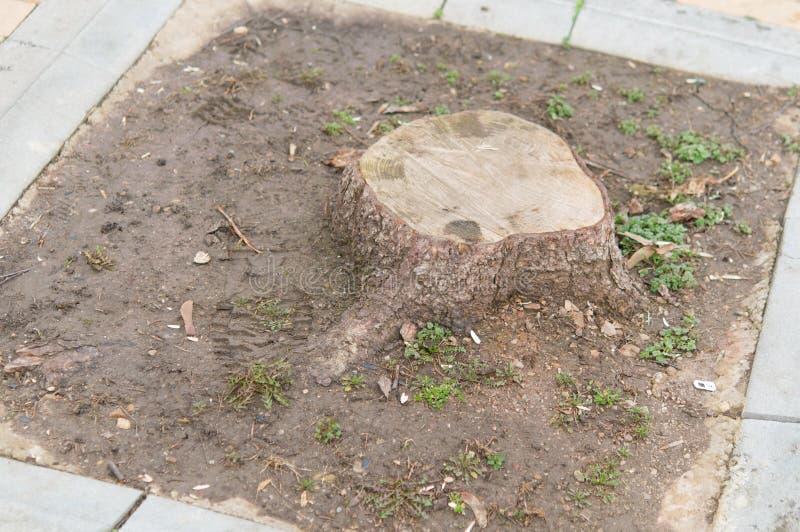 Het snijden stierf aan boomwortel royalty-vrije stock afbeeldingen