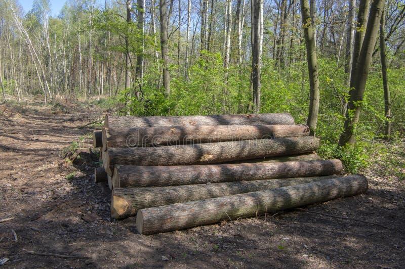 Het snijden van de bomen, de ramp van de schorskever, naaldboomboom opent stapel in bos het programma royalty-vrije stock afbeelding
