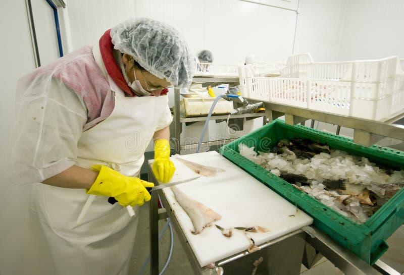 Het snijden van de vrouw vissen in fabriek stock foto's