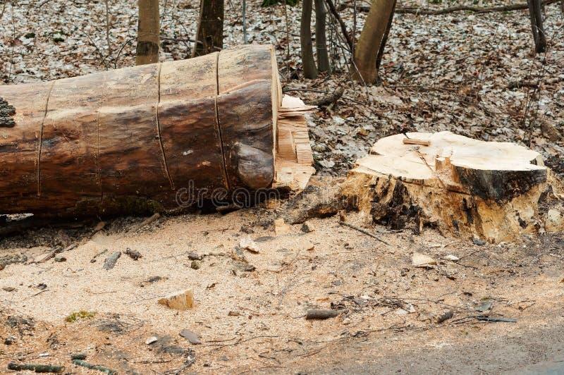 Het snoeien van bomen langs de weg, gezaagde boom aan de kant van de weg stock afbeeldingen