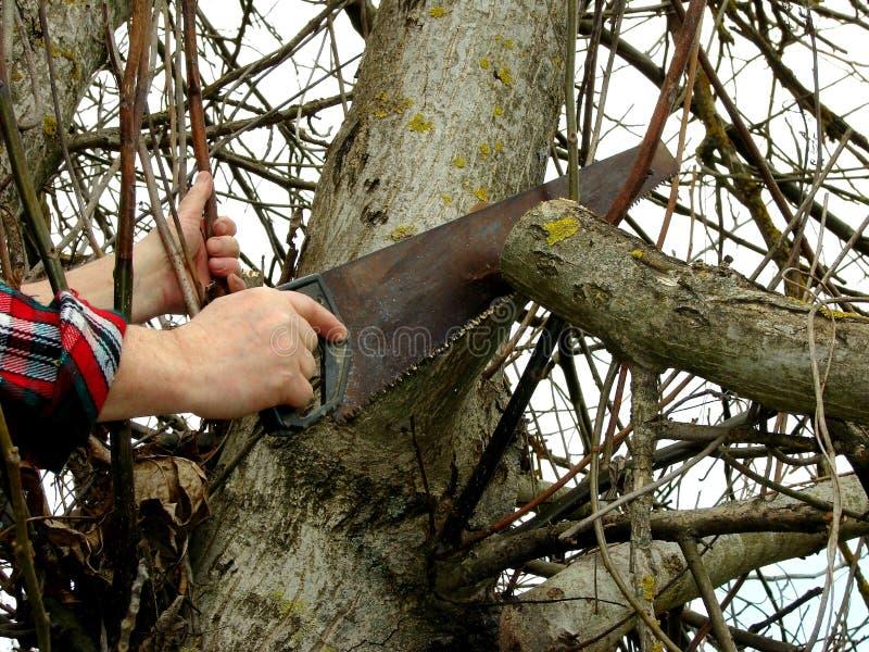 Het snoeien van de boom stock afbeelding