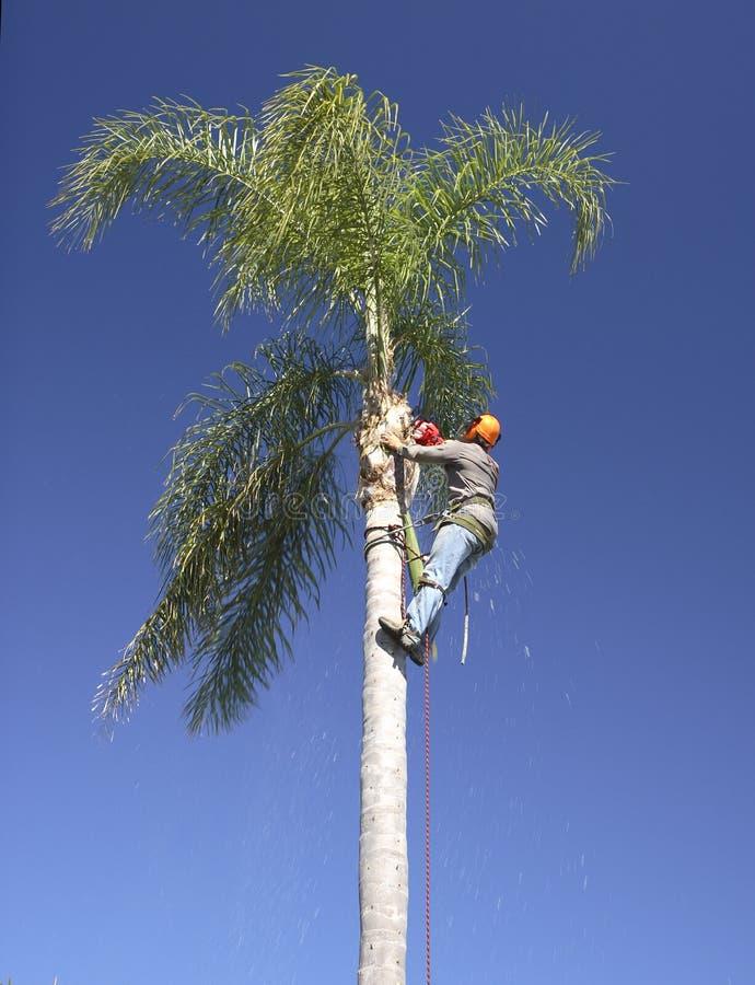 Het snoeien van de palm royalty-vrije stock afbeeldingen