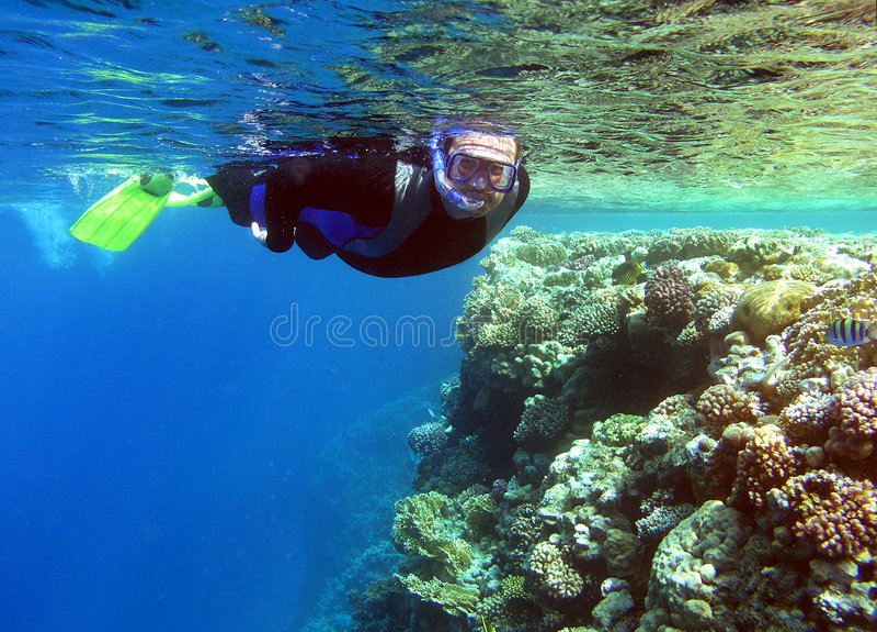 Het snorkelen stock afbeelding