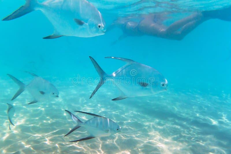 Het Snorkelen In Caraïbische Zee Van Mexico Stock Afbeelding