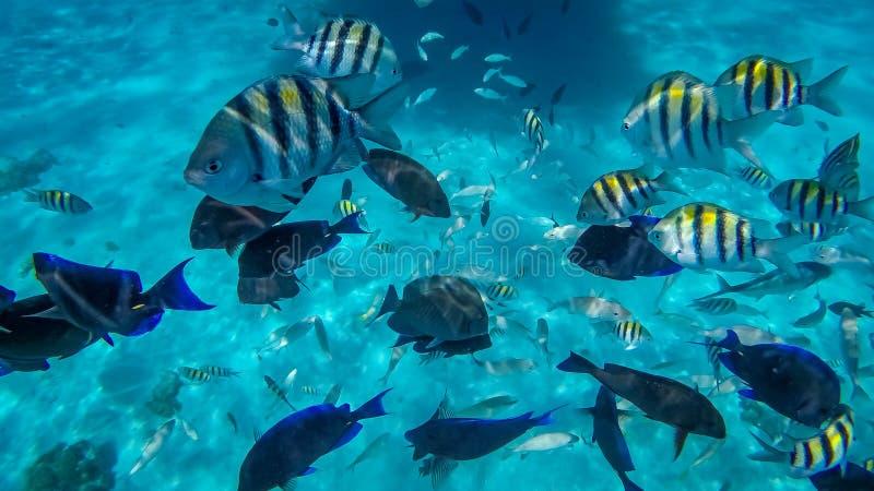 Het snorkelen in de Caymaneilanden royalty-vrije stock afbeelding