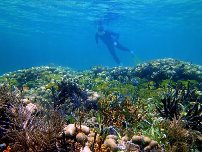 Het snorkelen in het Caraïbische overzees stock afbeelding